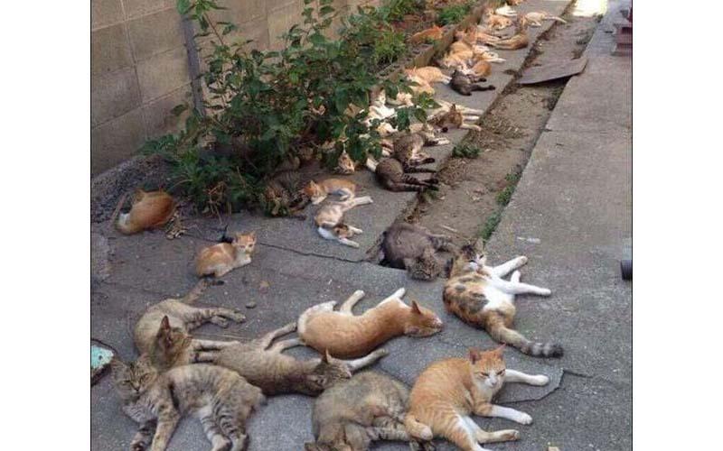 原先只是為了驅蚊種植「貓薄荷」沒想到竟讓整個地區的貓咪都嗨慘了!