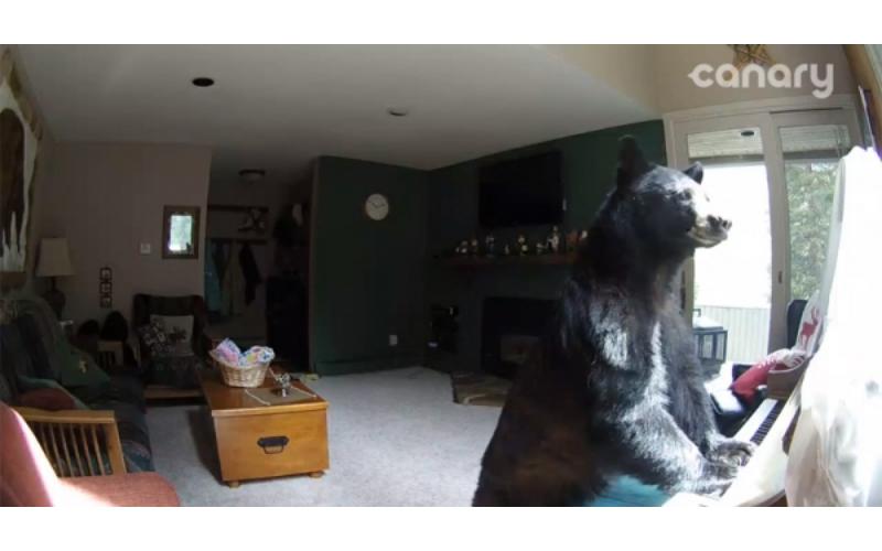她發現「家裡遭小偷」調監視器一看卻驚呆「一隻熊在彈鋼琴」!(影片)