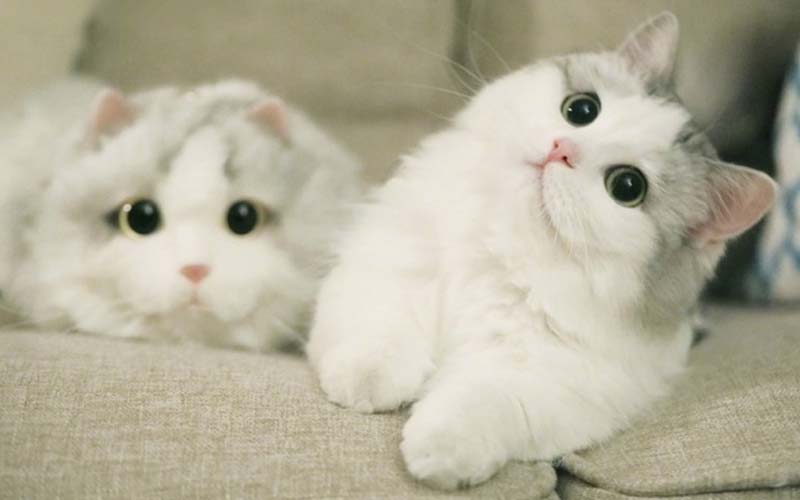 主人買了一隻跟牠一模一樣的布偶包包,萌貓吃醋對它揮肉球,窩在旁邊可愛極了!