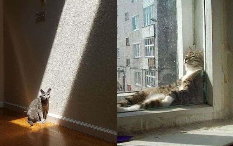 30張圖片證明「貓咪真的超愛日光浴」的照片!你到底當自己主子還是神呀XD