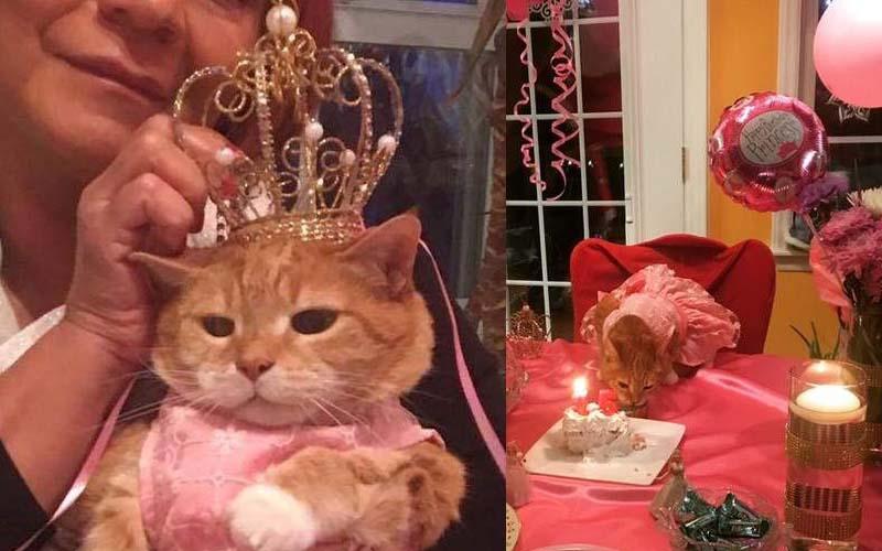 貓奴幫自家主子舉辦的「超豪華生日趴」下輩子當貓是不是比較幸福啊?!