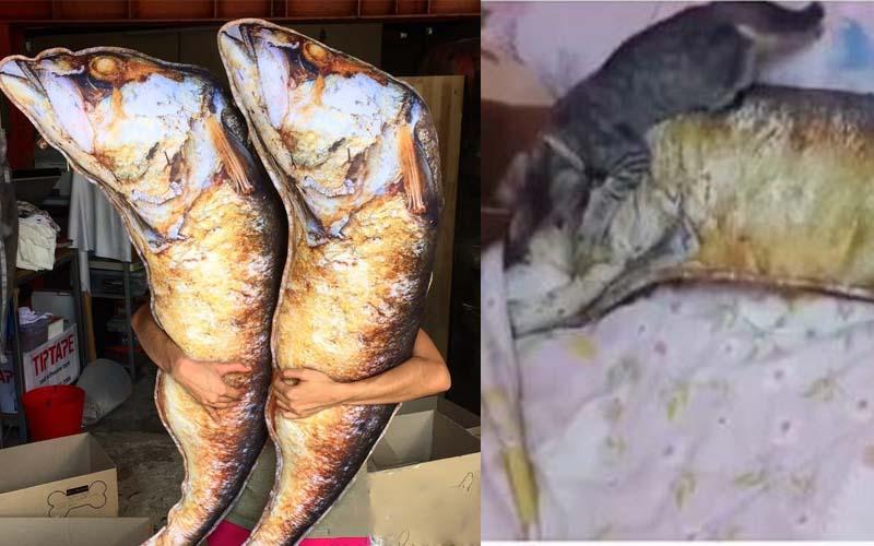 給主子買了一隻烤魚抱枕,牠每天除了啃還是啃!疑?怎都咬不動?