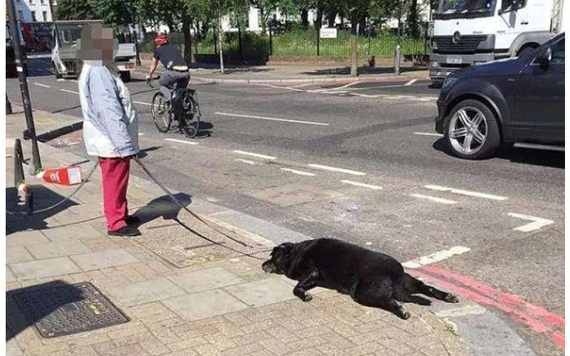 在路上看到婦女牽著兩隻狗,沒想到仔細一看,越來越不對勁!上前詢問真的嚇壞了!