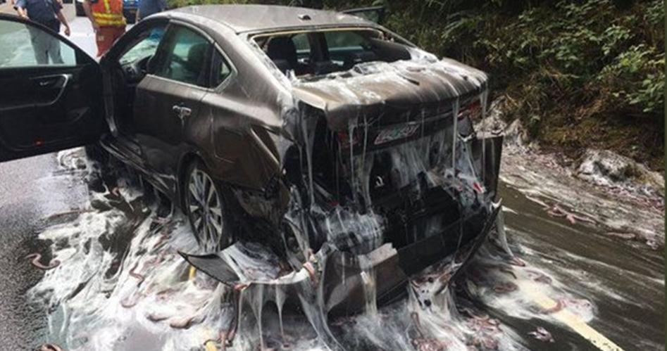 史上最噁車禍!高速公路「3噸鰻魚逃亡」分泌大量黏液「濕濕黏黏的」讓人好害羞~