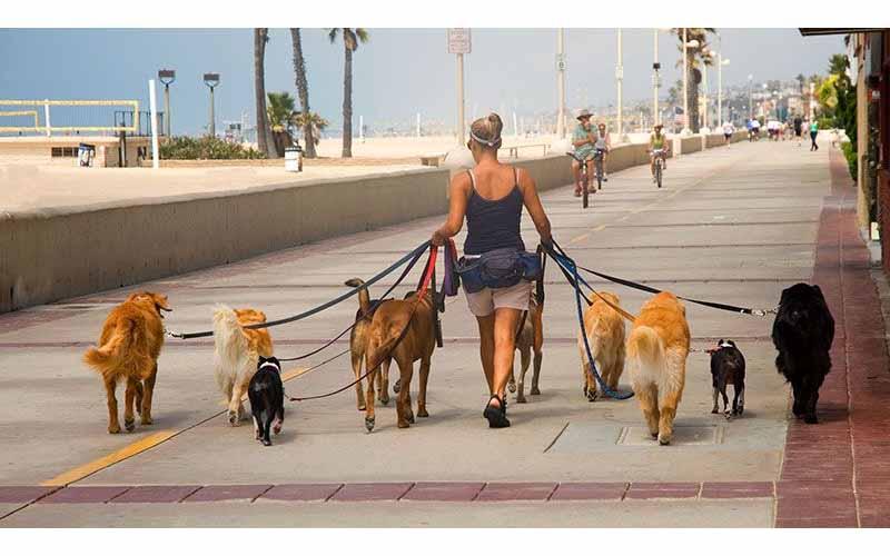 為何德國街上完全看不到流浪狗?看完真正原因讓人太佩服了!
