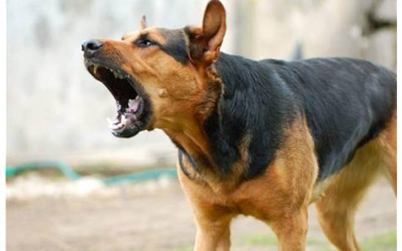 當家裡的汪汪亂吠時,一味地斥責牠,是沒有效果的喔!!