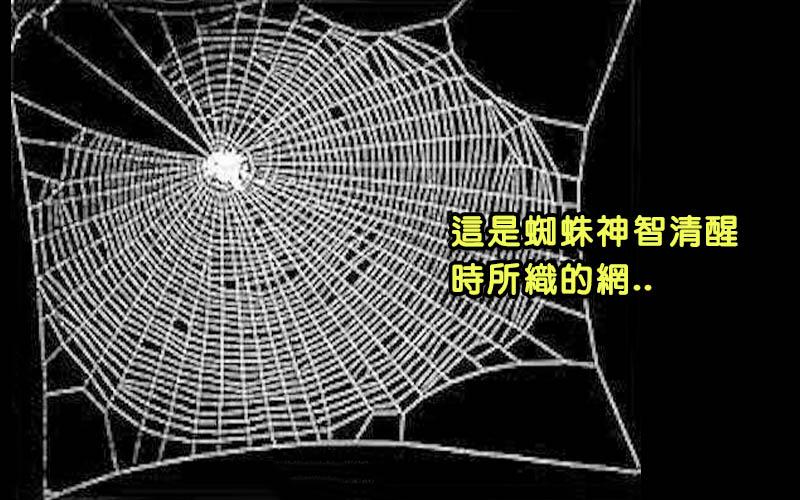美國NASA對蜘蛛做了毒品測驗:吸毒後織的蜘蛛網一團糟,根本抓不到獵物了?!