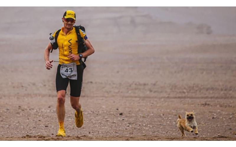 馬拉松跑到一半遇「狗狗亂入陪跑百公里」賽後卻失蹤...他橫越了「半個地球」終於把牠帶回家!