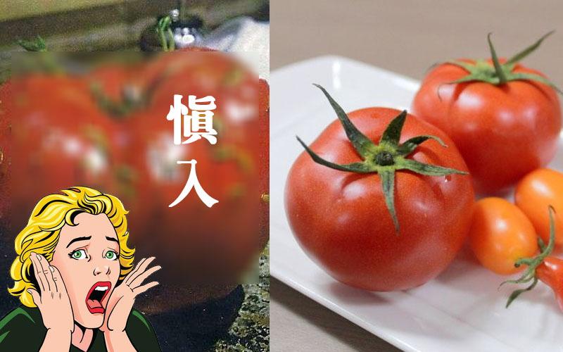 害怕不要看!原來蔬菜水果發芽這麼可怕!看到我雞皮疙瘩掉滿地!