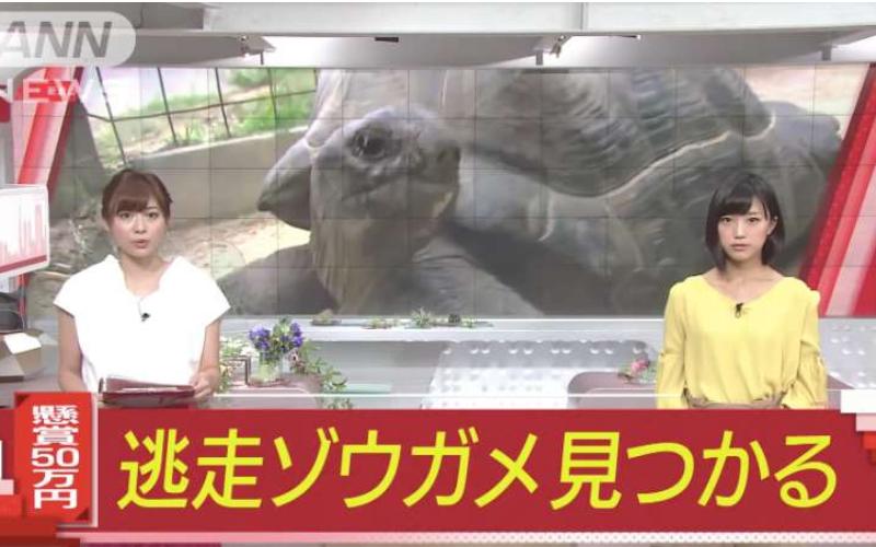 日本巨龜逃脫「動物園懸賞50萬」結果半個月後「找到牠的地點」讓大家都嘴角失守了!