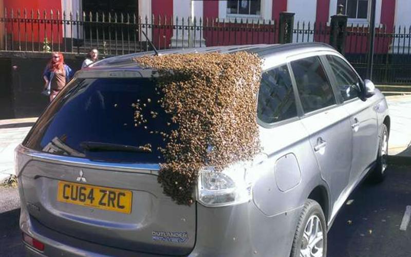 她的車子連續2天都被一整群的蜜蜂軍隊「佔領」,直到翻開後車廂她才傻眼發現真正的原因!
