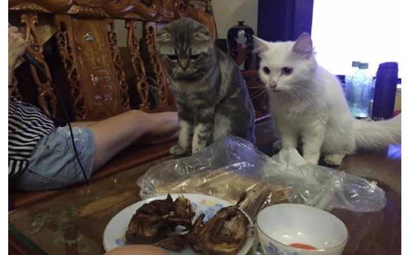 買了烤雞正準備大快朵頤,沒想到一個不留神,主子竟叼走不放!