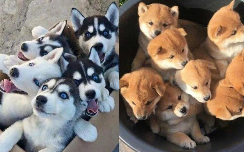 「你好,請問妳要哪一籠啊?」這些狗寶寶可愛到你不要不要的!