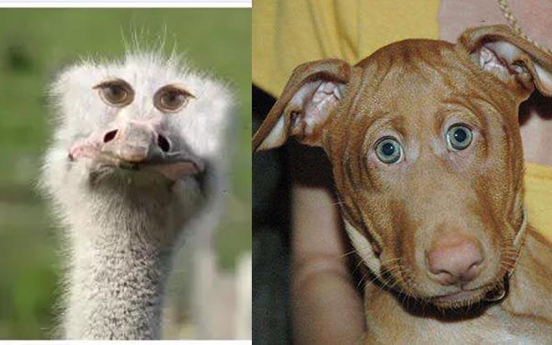 你有疑惑過為何動物的眼睛在側邊嗎?如果動物的眼睛長在正面,根本只剩詭異沒有可愛了!