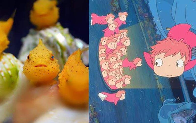 現實版的《崖上的波妞》呆萌大眼雖然是魚,但卻不太會游泳!