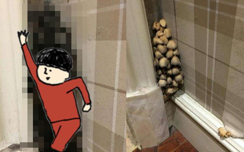 新房入住1年「牆角竟炸出大量蘑菇」,黑黑那一幕讓他差點昏倒...我要吐了!