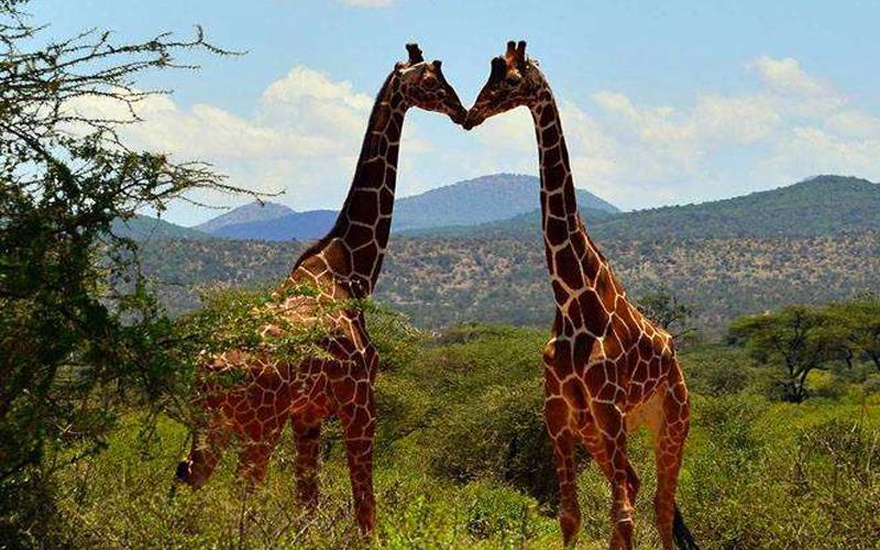 94%的長頸鹿是Gay!25個「不知道還好,一知道後就回不去了」的動物界驚奇事實!
