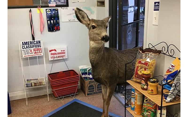 聖誕夜母鹿來訪,店員用花生打發走牠,沒想到牠後來竟攜朋引伴來!