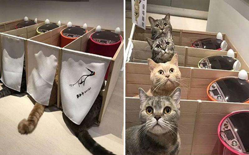 主人為了貓咪搶食打架,竟打造出「一蘭喵麵館」,一起抬頭的畫面萌度破表啊!