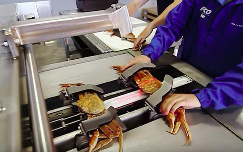 蟹肉怎麼來?「自動剝蟹機器」整隻螃蟹被分解到乾淨溜溜!過程流暢到超療癒(影)