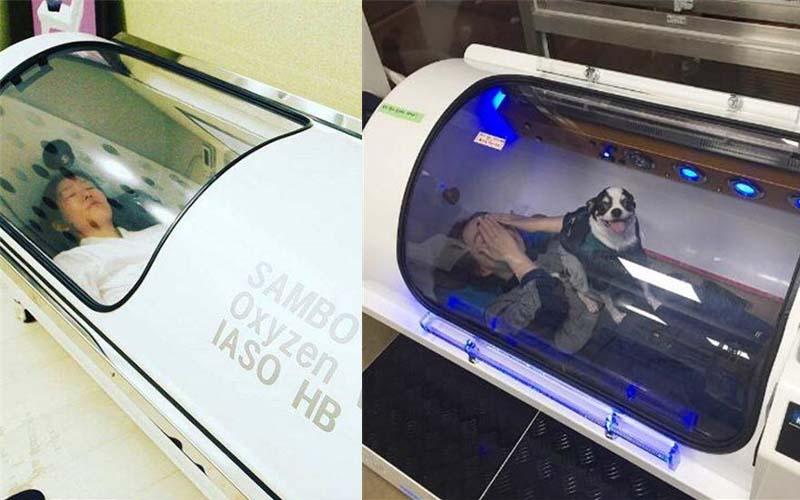 霧霾超標!韓國推出科技感「氧氣膠囊咖啡館」免費喝咖啡,狗狗也能一起進去!