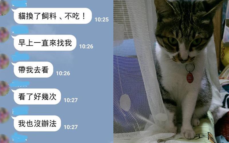 幫女兒餵飼料貓咪卻怎麼都不吃,傳照片詢問讓網友看了笑翻!:給朕拖出去斬了!