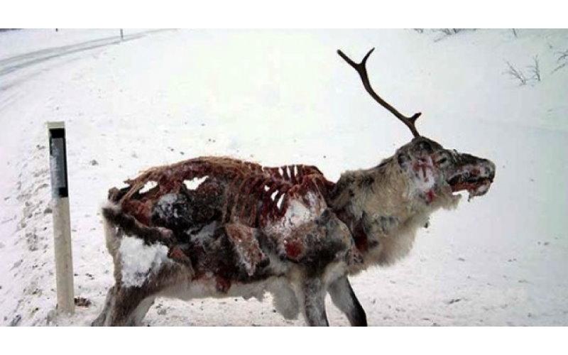 真的有「陰屍鹿」!美國出現「腦袋已被啃食乾淨的鹿」專家:擔心人類要被傳染