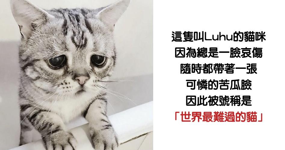被號稱「世界最難過的貓」不論何時總是一臉憂愁,難得「露出笑容」超萌反差融化16萬粉絲!