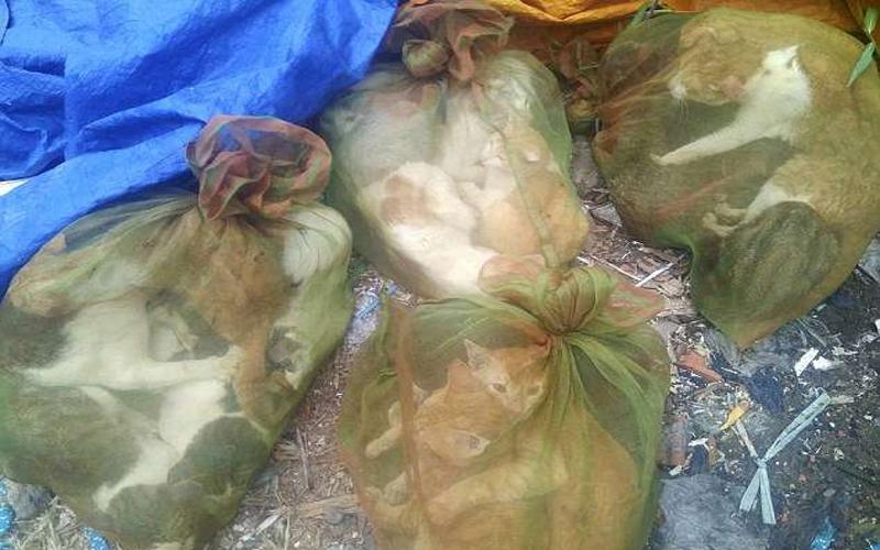 他在越南「貓肉市場」拍下一系列讓人心碎的畫面,為了「增強性能力」遊客也來朝聖吃牠們!
