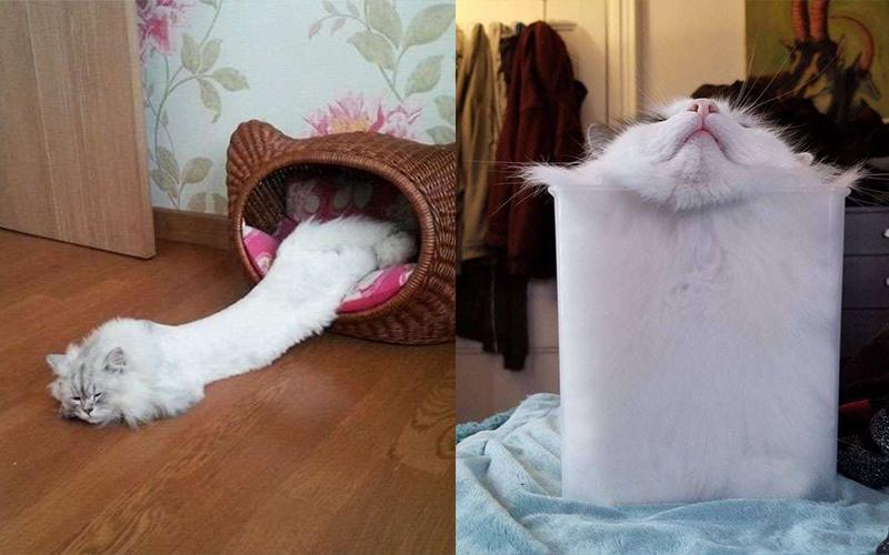 20張軟萌照片讓大家「重新認識喵星人」!「貓體力學」什麼鬼地方都可以塞好塞滿