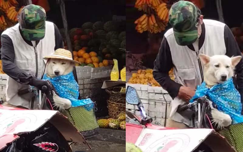 老爺爺雨天騎車不顧自己淋雨,細心幫菜籃裡的愛犬綁上雨衣、戴好草帽。