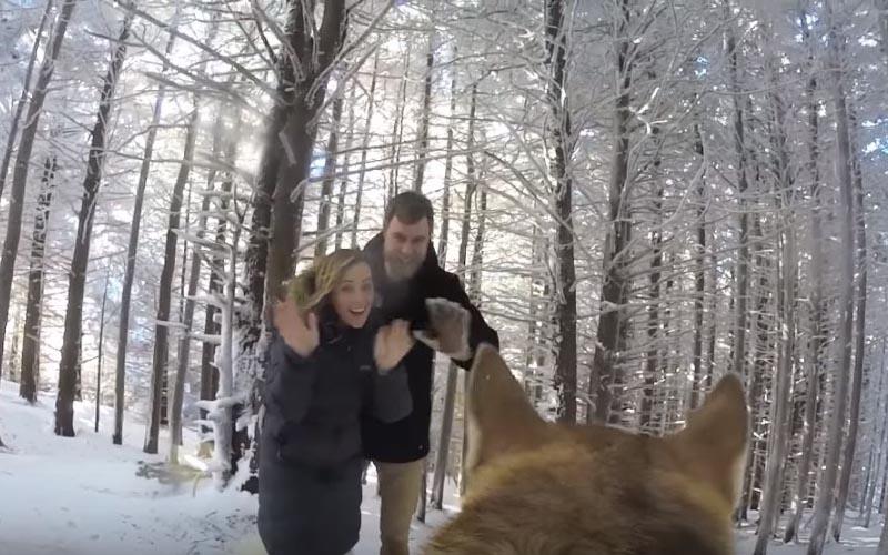 婚攝是隻狗!這對夫妻突發奇想讓狗狗當「婚禮攝影師」沒想到拍出來的成果這麼棒!