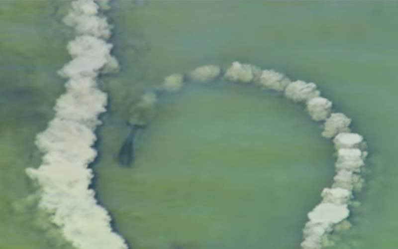 海豚不斷用尾巴拍打畫圓,為何要這樣做?這真是再次讓人們看到了海豚的高智商!