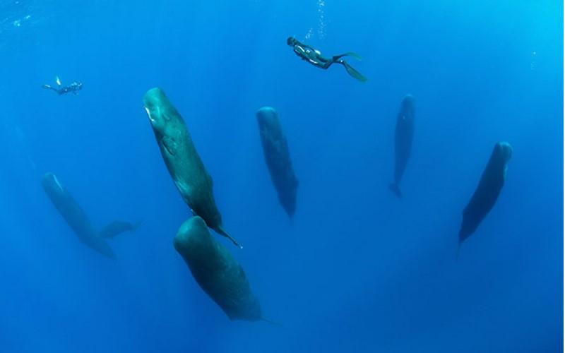 攝影師捕捉抹香鯨「集體進入小睡」 難得的睡姿曝光:太可愛