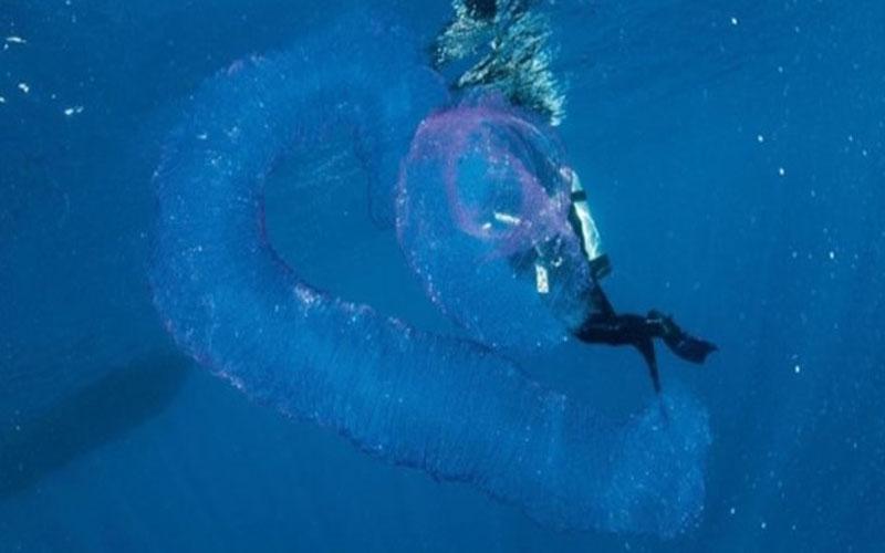 澳洲潛水員在海中發現「粉紅生物」,網友告知後才發現遇到的是「牠」!