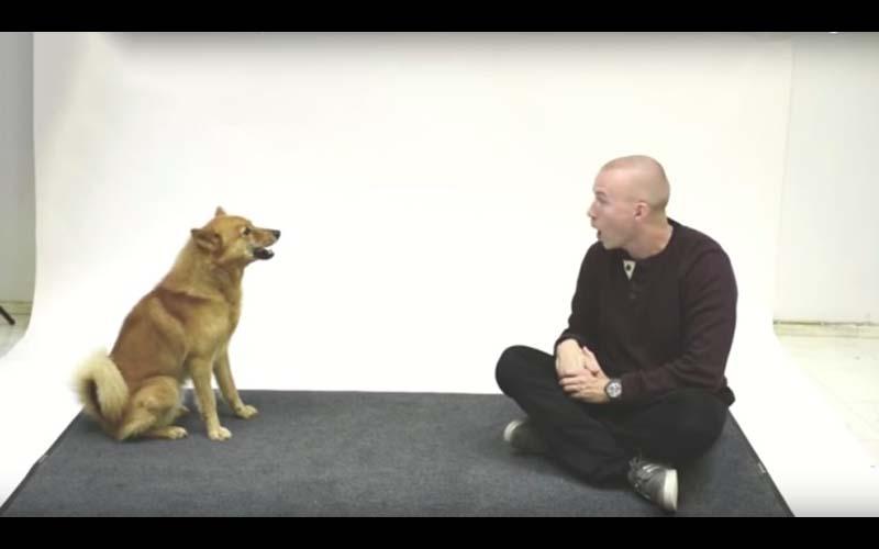 他是史上最會學各種狗叫的人!和狗吵架,狗狗們的反應大不同,好搞笑!