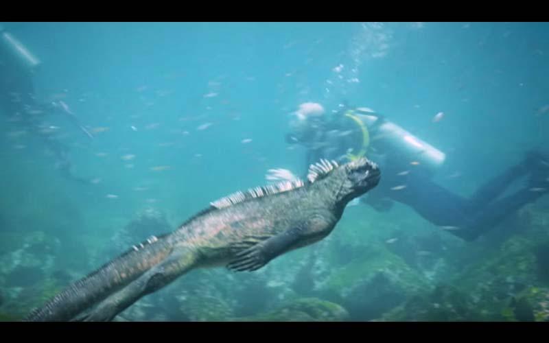 潛水員在海中與一隻「不明詭異巨獸」擦身而過?牠有著兇猛的外表,看起來根本縮小版酷斯拉!