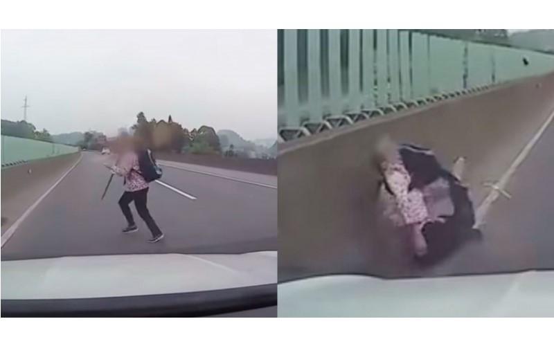 都沒在看的…三寶一衝被路殺!她橫竄高速公路 下場「四肢扭曲噴飛」駕駛嚇瘋 (影)