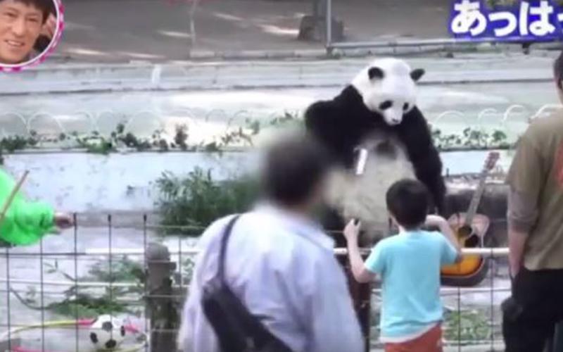 諧星在動物園裡「假扮熊貓」完全沒人發現,最後不得已放大絕「彈吉他」結局笑翻網友!