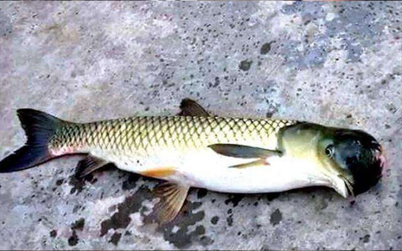 嚇壞了!釣魚釣到變種「鳥頭魚身怪魚」...專家說明「真相」後釣客決定「這麼做」!