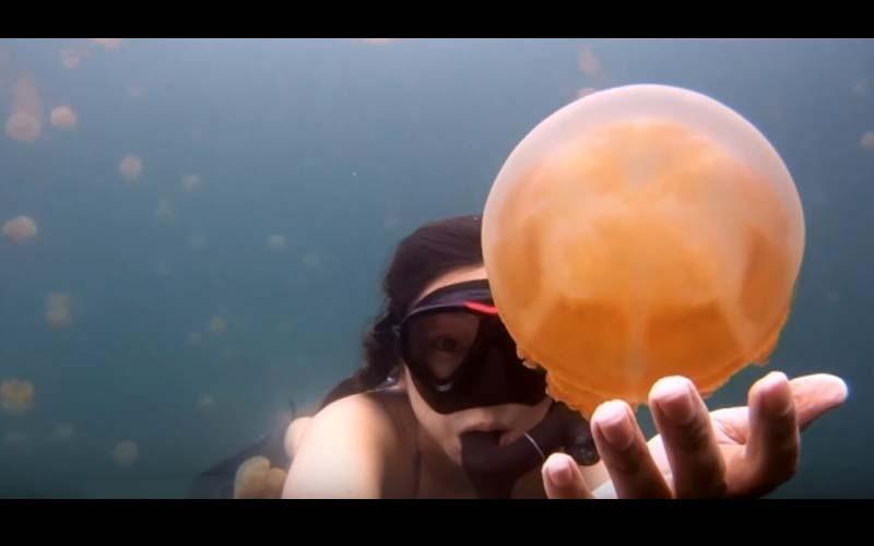 她自拍潛入水母天堂的畫面!水面上平凡無奇,海裡卻是美到翻掉的景致!