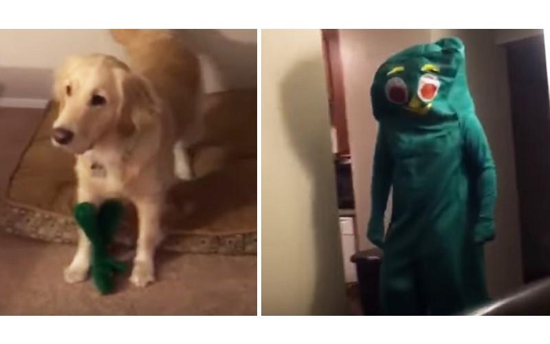 主人超有心!扮成「狗狗最愛玩具」給大驚喜 狗狗看到後....起肖了XD