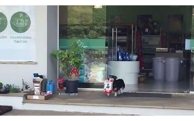 吃貨狗狗買飼料「萌叼戰利品」直奔回家,連在路旁灑尿也不願放下伙食!