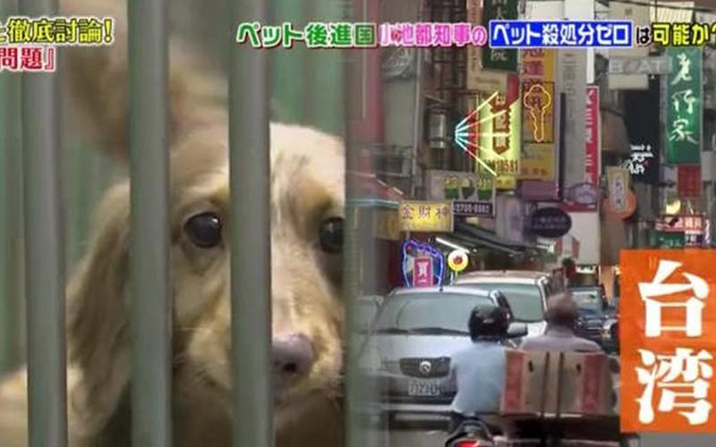 日本節目談「台灣狗狗繁殖場」殘忍真相,母狗下場很悽慘!