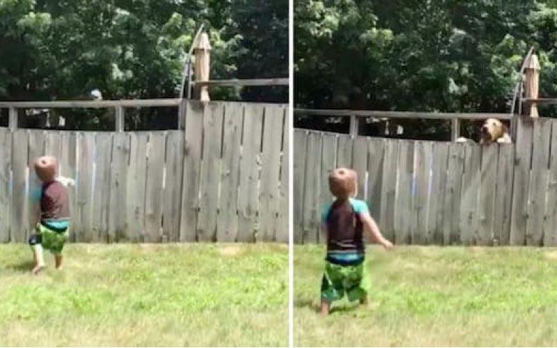 圍欄也無法阻止2歲兒跟「鄰居狗狗玩耍」網友融化:這是一種純粹的幸福~