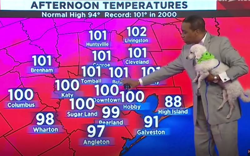主播報導突見「白色小狗亂入」,神反應邀牠一起入鏡收視飆高, 網友讚:超Q天氣預報!