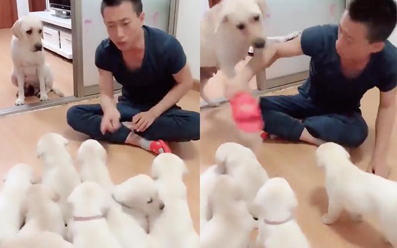 狗寶寶們集體無視主人說教,拖鞋拿出來「準備教訓」狗媽急阻止:母湯打阿