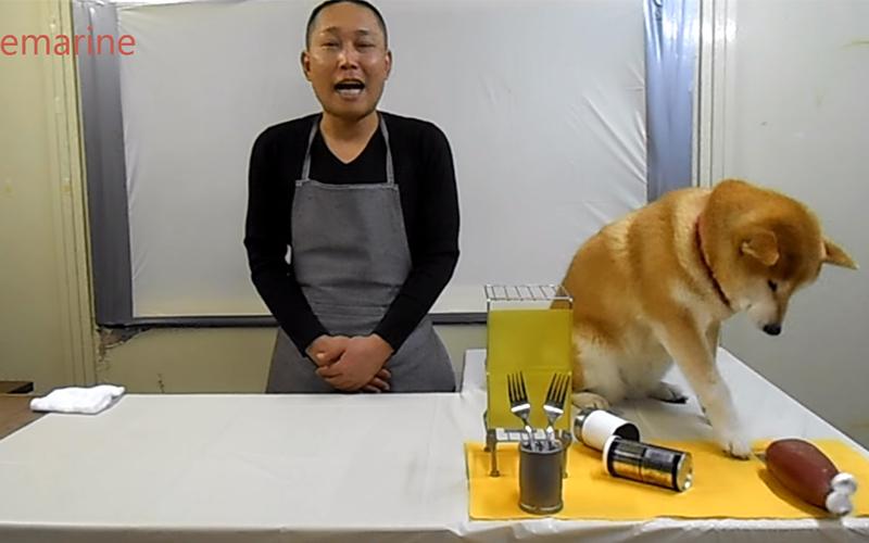 大廚請來狗狗當助理「全程幫倒忙」超搶戲一秒變主角!網友笑翻