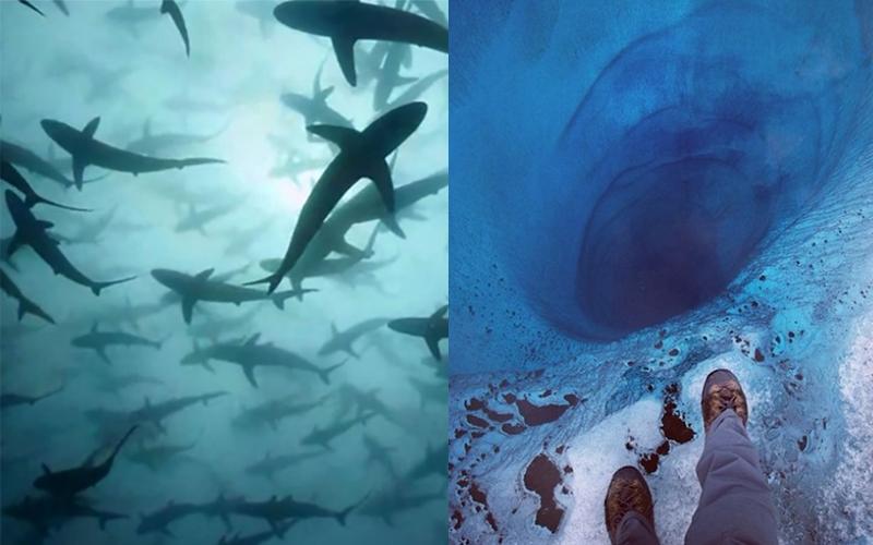 你有海洋恐懼症嗎?21張圖測試你對海洋恐懼症的程度...1/3的圖看了會害怕你可能就患有隱性因子!