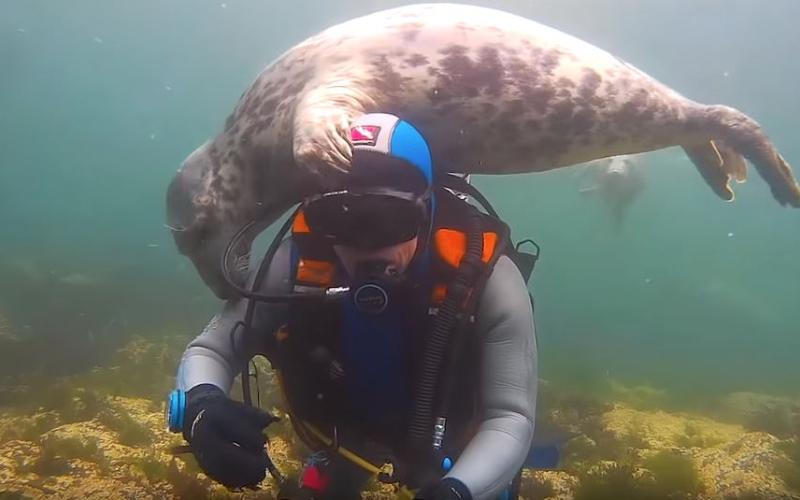 他潛入海底「忽有龐然大物逼近」海豹伸小短手「不斷搓揉問候」